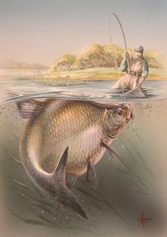 e0446c617b05469ae09e4799c45c94c0-fishing-pictures-fish-paintings